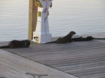 Two otters were on the dock right beside our boat.
