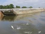 Asian carp jumping by boat.