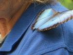 Butterflies @ Aquarium in Chattanooga, TN