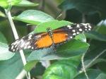 Butterfly @ Chattanooga Aquarium