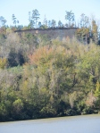 Very high cliff overlooking Black Warior - Tombigbee Rivers below Bushi Creek anchorage