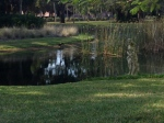 Pond @ entrance to Ringling Musium