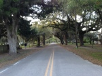 inckney Street, McClellanville, SC.  All the streets in this town look like this with beautiful Live Oaks & hanging moss.