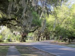 A beautiful street in McClellanville, SC