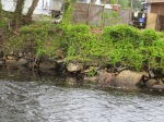 "The ""Rock Pile""   along the ICW"